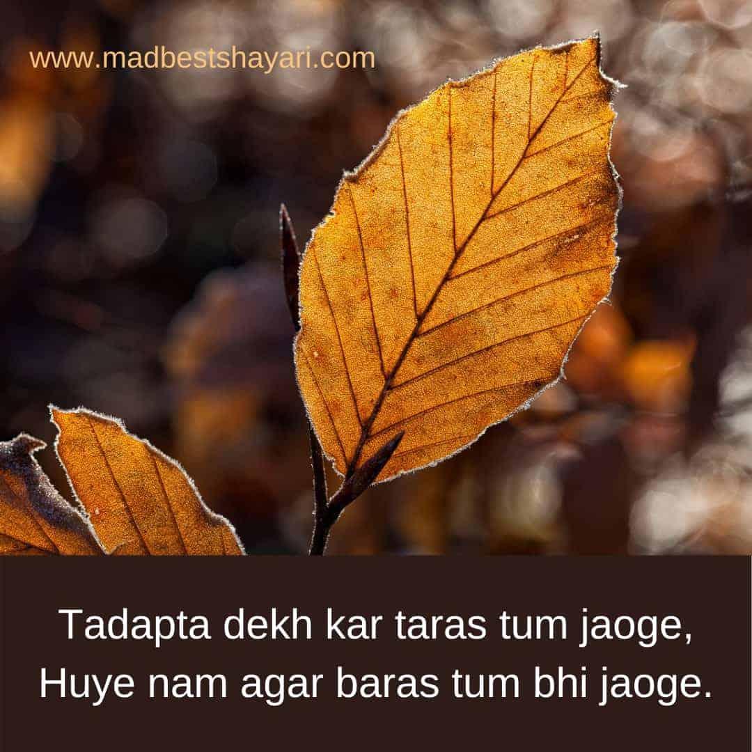 Painful Shayari Image